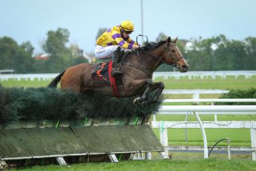 Steeplechase Stock by Valkyrie-Stock