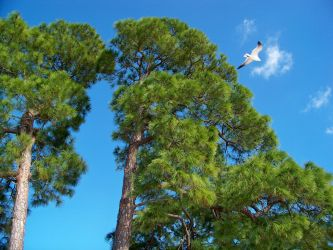 Trees in Anclote by BeCeejed