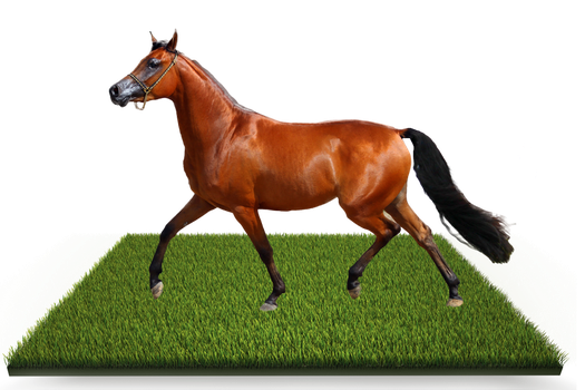 Horse Out of bounds 9 PSD by wsaconato