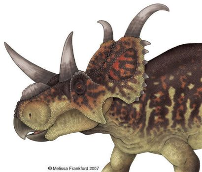 Wahweap Ceratopsian by mmfrankford