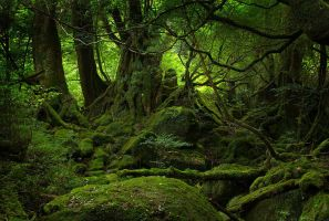 Green Forest by crazmo4sho