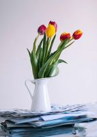 tulips by grezelle