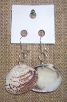 Large Shell Earrings by taniathepirate