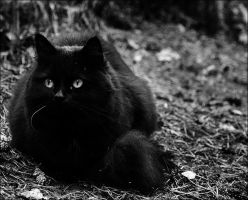 One white whisker by xenia-u