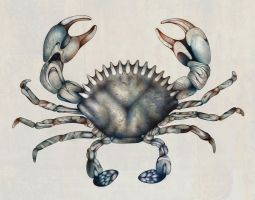 Crab by Adrianna-Grezak