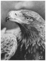 wedge-tailed eagle by lacidart