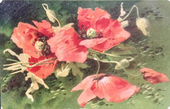 Poetical Poppies by Yesterdays-Paper