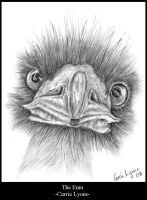 Emu Drawing by carriephlyons