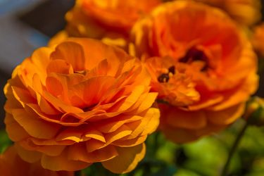 Some more flowers by ChristophMaier