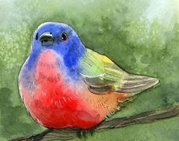 Painted Bunting happy by BlueBirdie