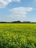 The yellow field by Stilleschrei