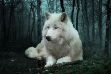Arctic White Wolf by JulieLangford