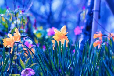 Spring scenery by Mars-Hill