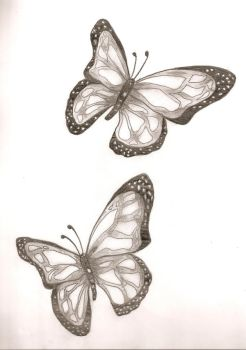 butterflies by almostexpelled