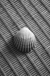 Photo - Shell by tigaer
