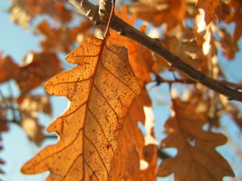 Withered leaves by Taychimono