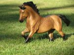 Collection Images: Copperfox Welsh Cob by CarolaFunder