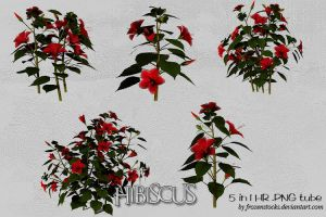 UNRESTRICTED - Hibiscus Tubes by frozenstocks