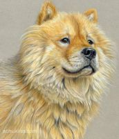 Young Chow Chow by sschukina