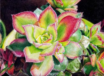 Succulent in color pencils by KingVahagn