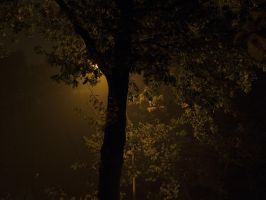 Leaves at night 1 by Inilein