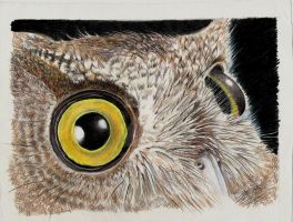 owls eyes by winstonscreator