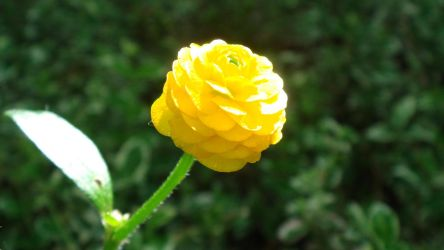 tiny yellow flower by adderx99
