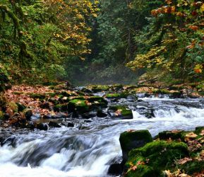 Water in the fall by thepnwlife
