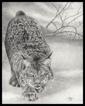On Silent Feet - Canadian Lynx by HOULY1970