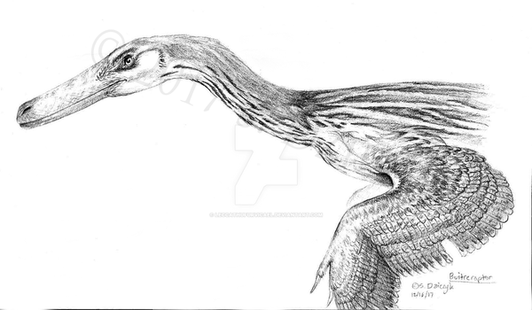 Buitreraptor gonzalezorum by LeccathuFurvicael