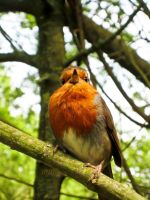 ROBIN by Iris-cup