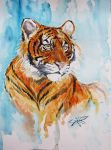 Tiger by Gotat