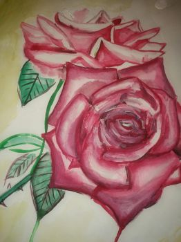 some old rose painting  by manjaDoom