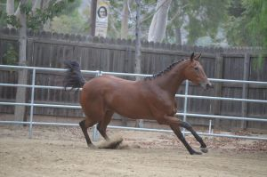DWP FREE HORSE STOCK 142 by DancesWithPonies