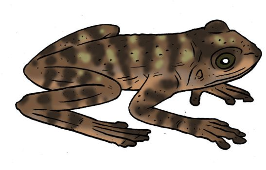 The Lost World Bestiary -Spotted High Tree Frog by Pristichampsus