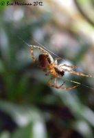 Spider Macro by BreeSpawn