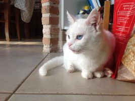 My cat sits different XD by jomy10