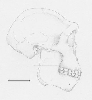 Homo erectus male from East Africa (1.8-1.2 Mya) by Afrovenator