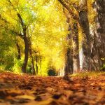 the Fabulous Fall by Alexander-Osika