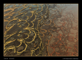 lace coral by fraterchaos