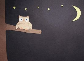 Sleepy Owl (Animation) by apparate