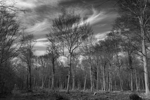 5385 Forest in black and white by RealMantis