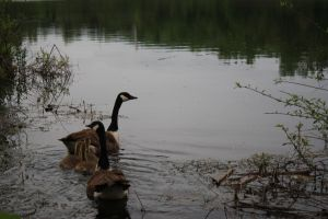 family of five by fontainekia