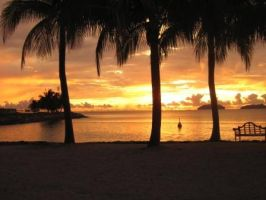 Palm trees and sunset by mike19