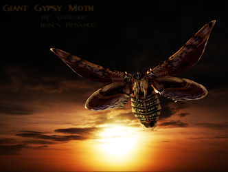 Giant Gypsy Moth Model by a-m-b-e-r-w-o-l-f