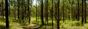 WoodLand Panorama by BreeSpawn