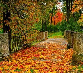 Nature Wallpaper 9538868 By Afzaal Mughal On DeviantArt