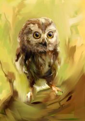 Owl2 by Fievy