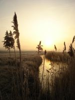 Sunrise through the reed by Haati-and-Mousa