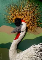 Grey Crowned Crane by moyao
